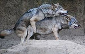 New Palestinian Dating Site For 'Lone Wolves'