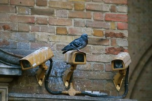 pigeon on cameras